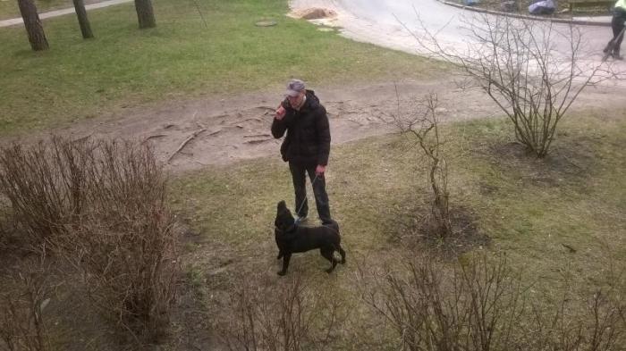 Найдена собака-девочка (ротвейлер) тел.860656075